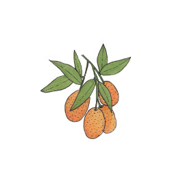 Kumquat (Fortunella)