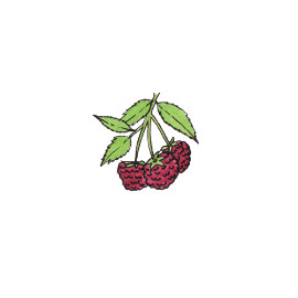 Ronce (Rubus)